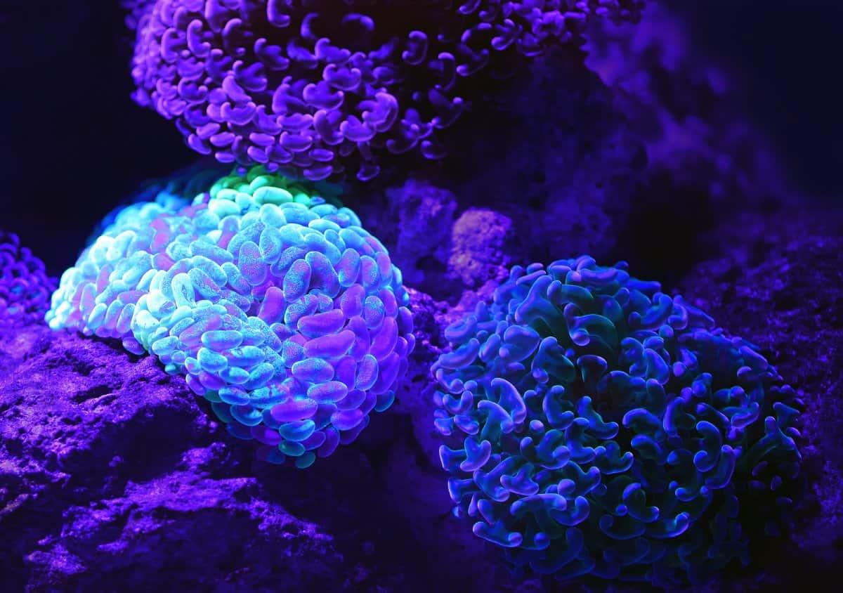 Forschungsarbeiten beim Biotech-Konzern Amgen