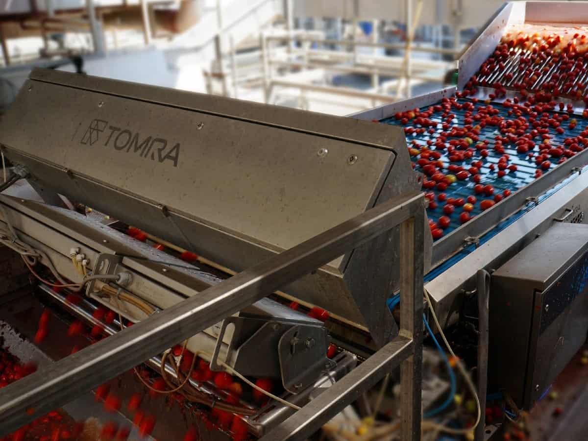 Effiziente und hochmoderne Tomatensortieranlage aus dem Hause TOMRA Systems