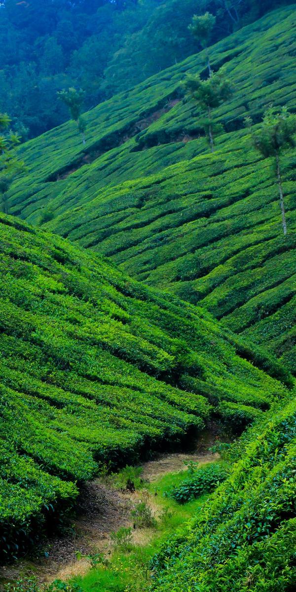 Es war ein weiter Weg vom Teeanbauer zum globalen Nischenmeister